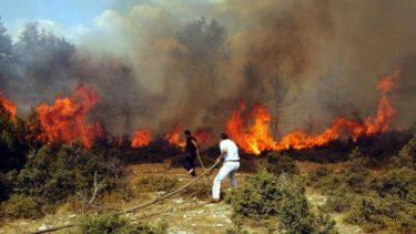 HKP İzmir İl Örgütü'nden orman yangınlarıyla ilgili açıklama: Küllerimizden Doğacağız