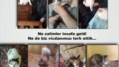 """Genel Başkan'ımız Nurullah Efe-Ankut'un """"Kedi Davaları"""" devam ediyor: Ne zalimler insafa geldi ne de biz vicdanımızı terk ettik…"""